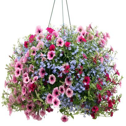 hanging baskets english country gardens. Black Bedroom Furniture Sets. Home Design Ideas